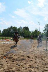 Schriktraining paarden voor De Toorn van Thunaer